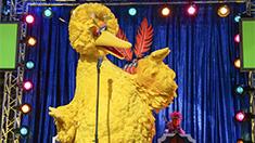 4712-big-birds-song